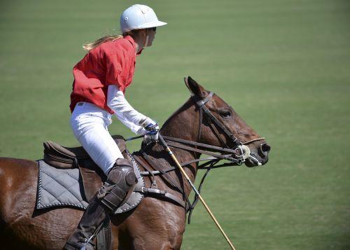 horse polo sport
