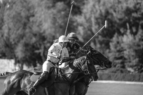 horse horses polo