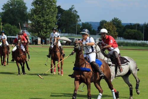 horse course competition