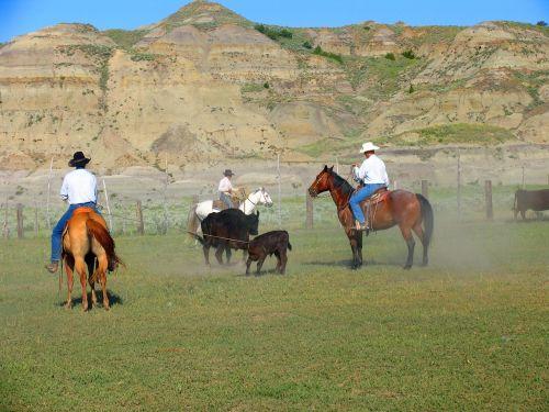 horse mammal equestrian