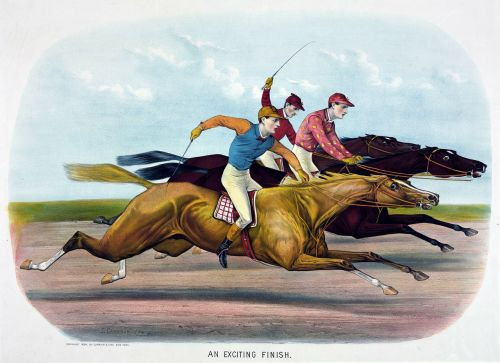 horse racehorse horses