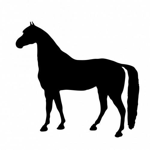 horse pony thoroughbred