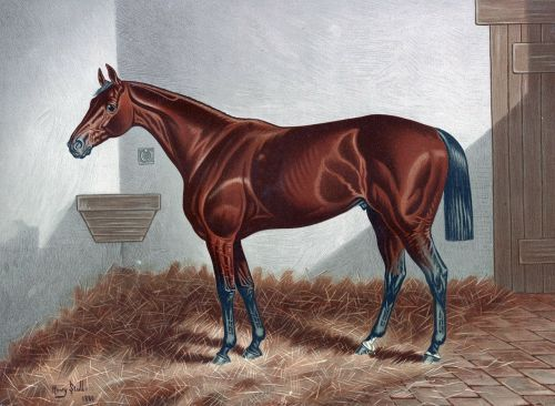 horse thoroughbred racehorse