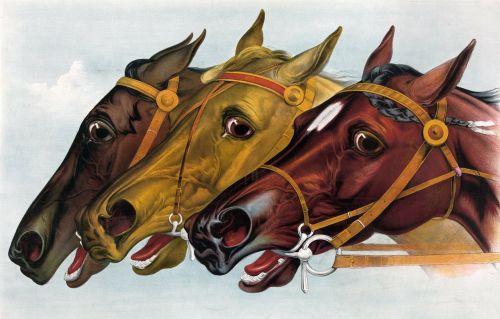 horse horses racehorse