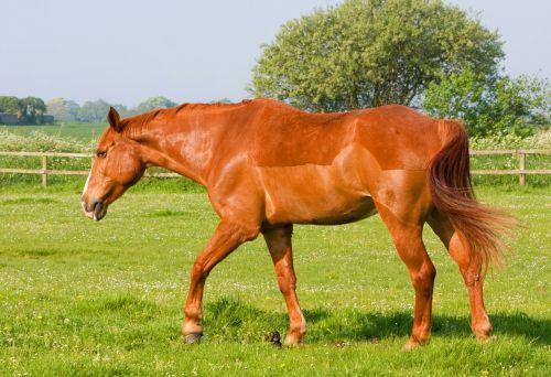 horse pony animal