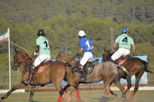 horse sport polo