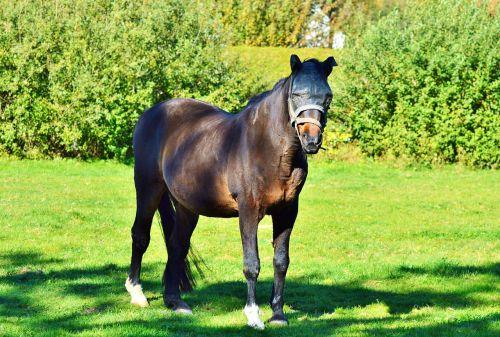 horse stallion pasture