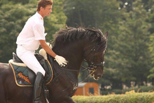 horse stallion reiter