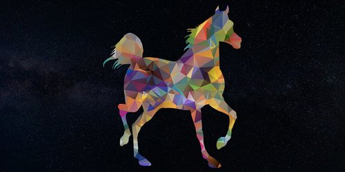 horse  animal  horse rider