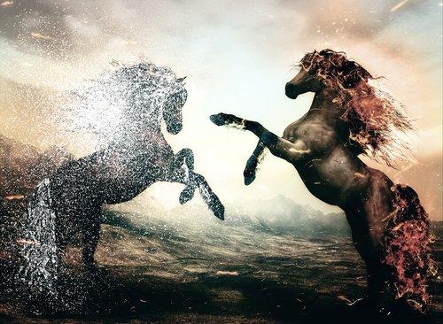 horse  horses  picture composition