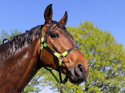 horse  portrait  wet