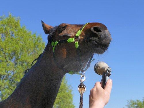 horse  shower  head