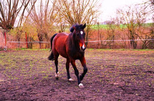 horse animal ride
