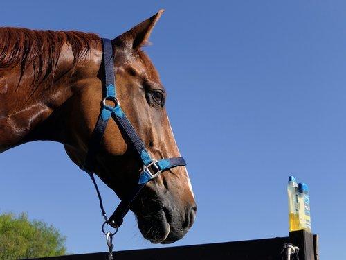 horse  wet  portrait