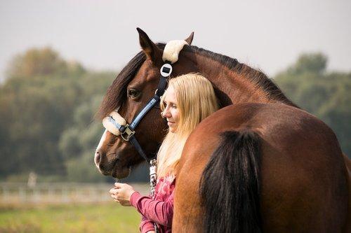 horse  human  woman