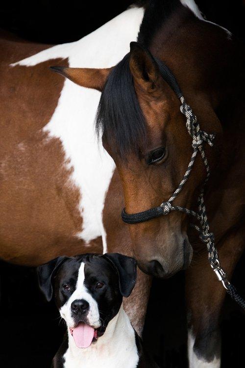 horse  pony  pinto
