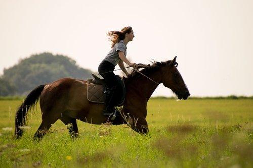 horse  reiter  cavalry