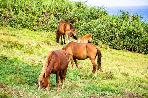 horse  meadow  landscape