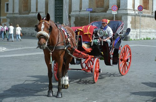 horse  chariot  traffic