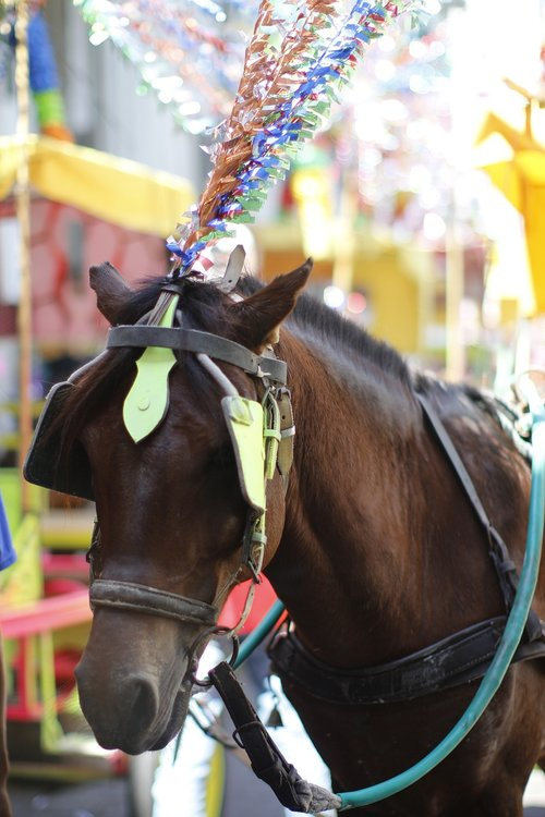 horse  animal  nature