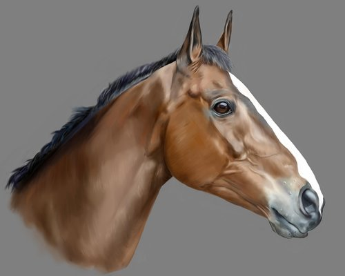 horse  animal  pet
