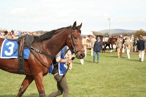 horse  racehorse  sport