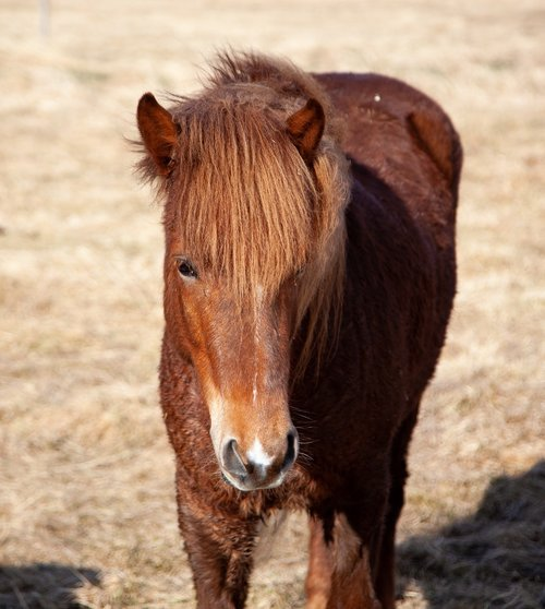horse  brown  frontal
