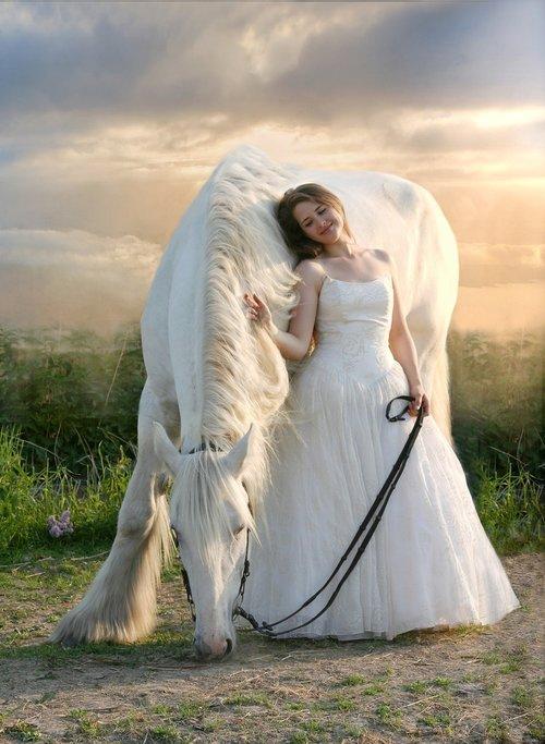 horse  equine  white horse