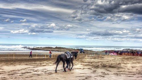 horse  racing  horse race