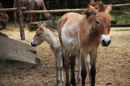 horse  zoo  wild horse