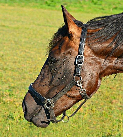 horse  mammal  animal
