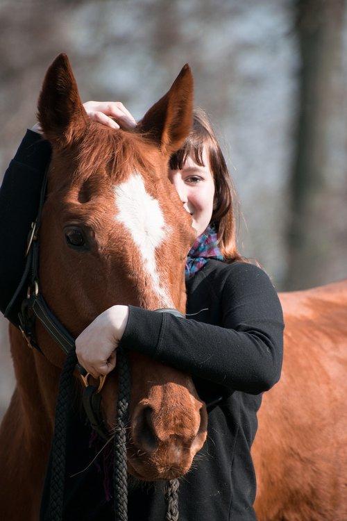 horse  animal  fuchs