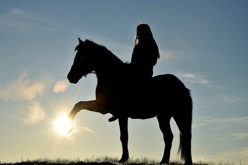 horse  huf  pony