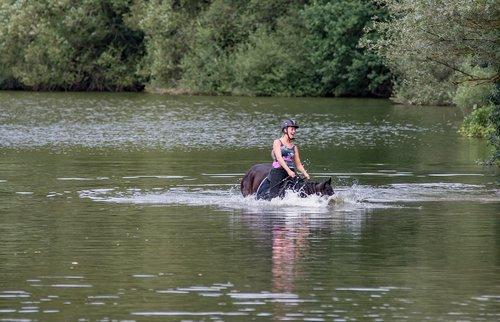 horse  water  amazon