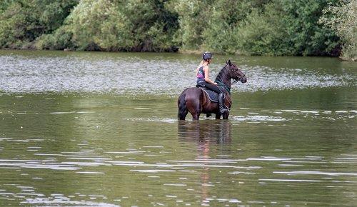 horse  water  rider