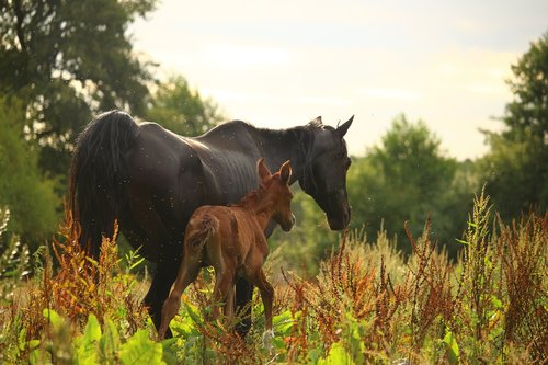 horse  mare  foal