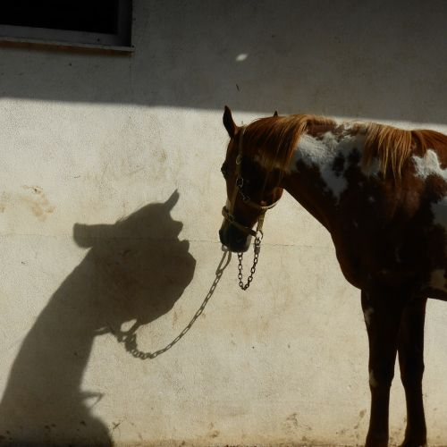 horse shadow entertainment