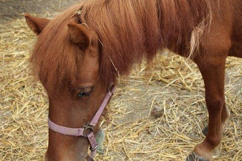 horse  straw  mane