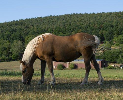 horse  pasture  mammal