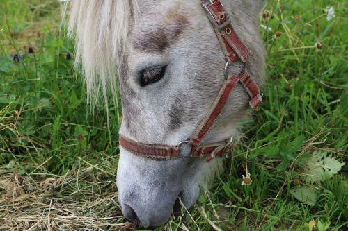 arklys,ponis,galva,pėdos,vilkikai,Richardas,valgo,valgymas,žolė