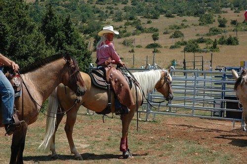 horse  ranch  cowboy