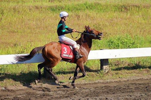 horse  race  indonesia