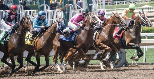 horse  horse race  race