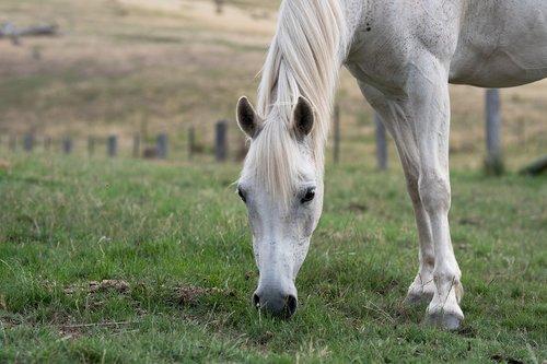 horse  pony  equine