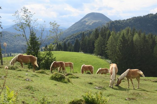 horse  horses  animal