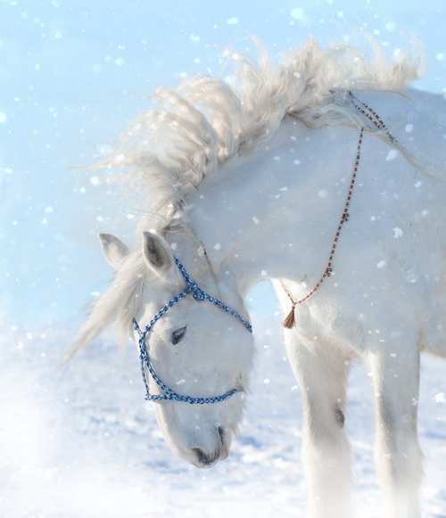 horse  snow  animal