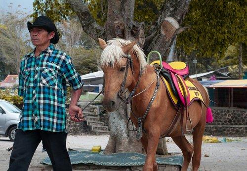 horse  horse racing  horseman