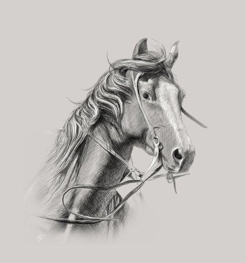 horse  wall decor  custom portrait