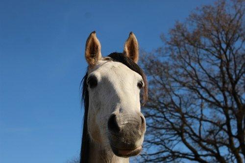 horse  white horse  nature