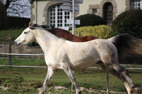 horse  horses  nature